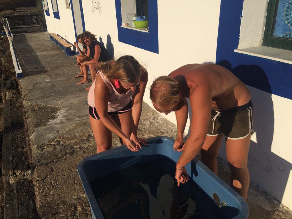 Kilpikonnien aurinkokylpy: Sanni Kaikkosen kokemuksia vapaaehtoistyöstä kilpikonnien suojelukohteessa Linosan saarella.