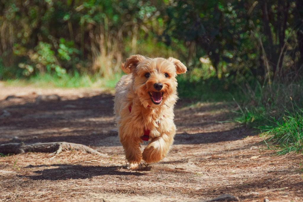 Vastuullinen retkeily koiran kanssa